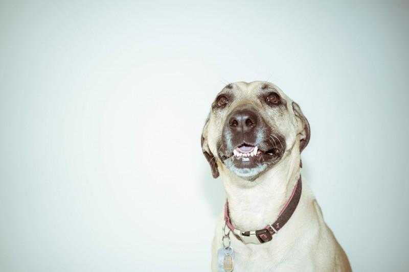 Forkæl din hund med et lækkert hundehalsbånd