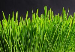 Få en flot plæne med græsfrø